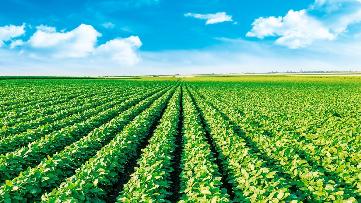 Manejo do complexo de doenças da soja e alto rendimento