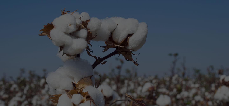 UPL leva seu portfólio de Fungicidas multissítio para a 5ª edição da Farm Show