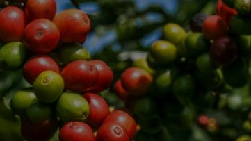 UPL traz Saúde Vegetal como tema principal para Expocafé 2019